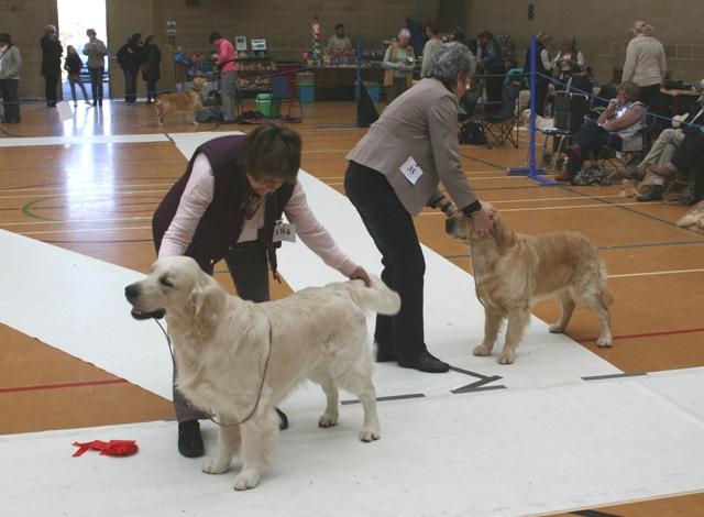 Graduate_Dog_1st_and_2nd