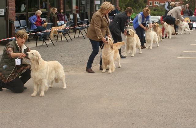 All Unbeaten Dogs