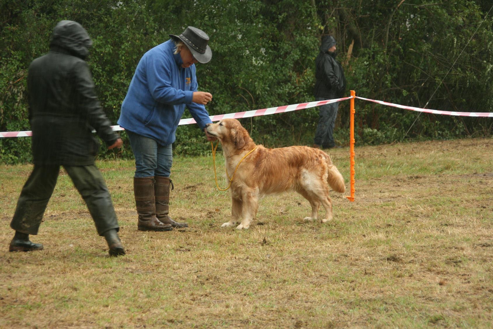 Fun Day Dog Show
