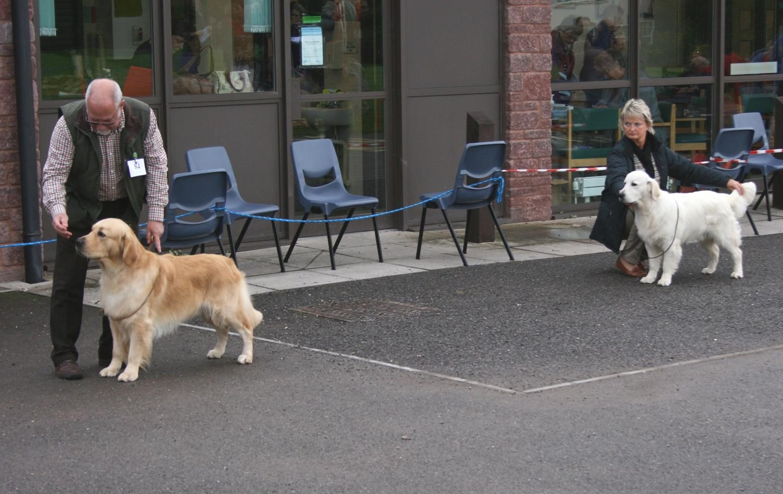 Graduate Dog Entry